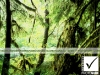8_photosure_travel_nature_forest_vancouver_island_canada_001h